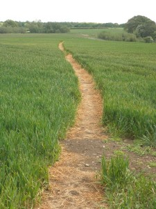 How a PROW through a crop field should look when cleared to a minimum width of 1 metre.